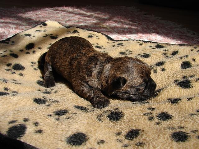 malinké štěně