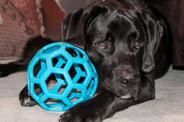 pes a hračka.jpg
