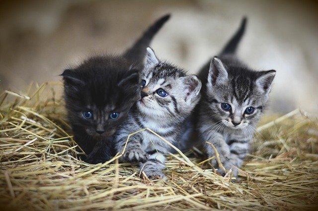 koťata na slámě
