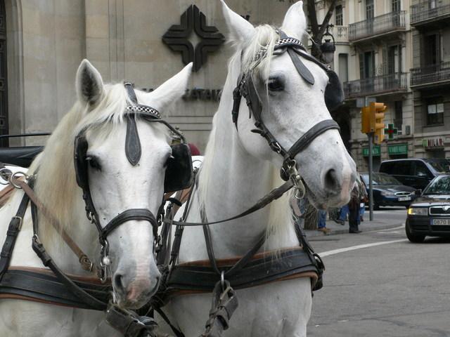 čelenky pro koně