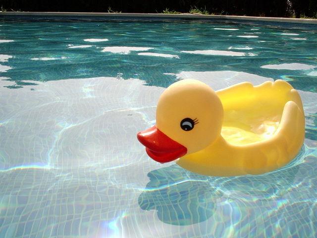 gumová kachna plave v bazénu