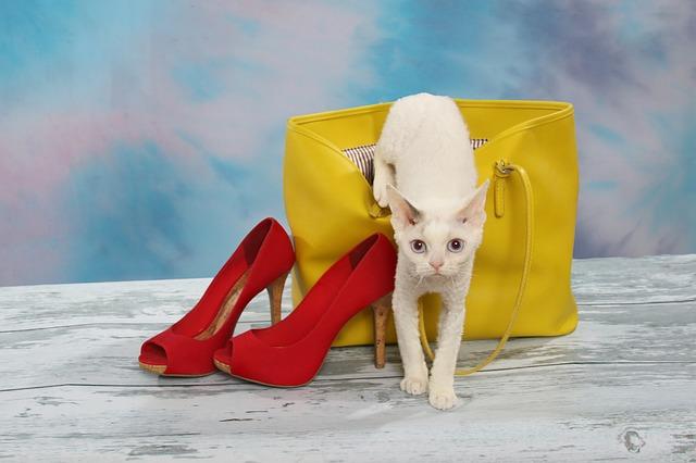 kočka leze ven z kabelky